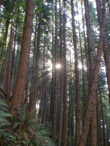 Pacific Trail Forest